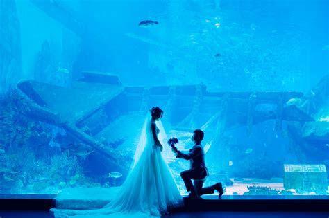 sea aquarium Archives   NATSTUDIOS   Award Winning
