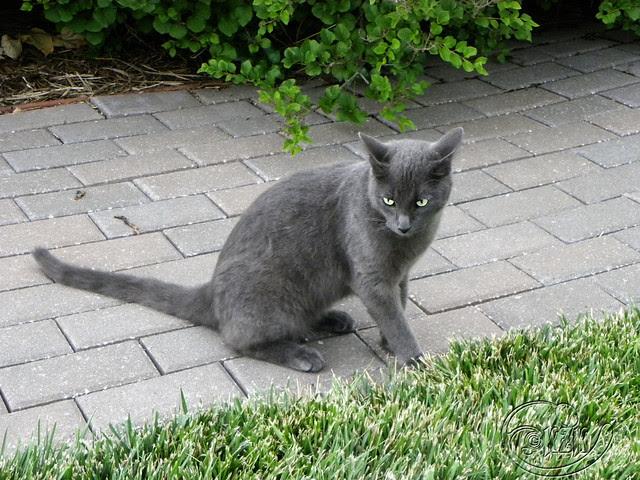 DSCN2019 Maude the Bully Cat