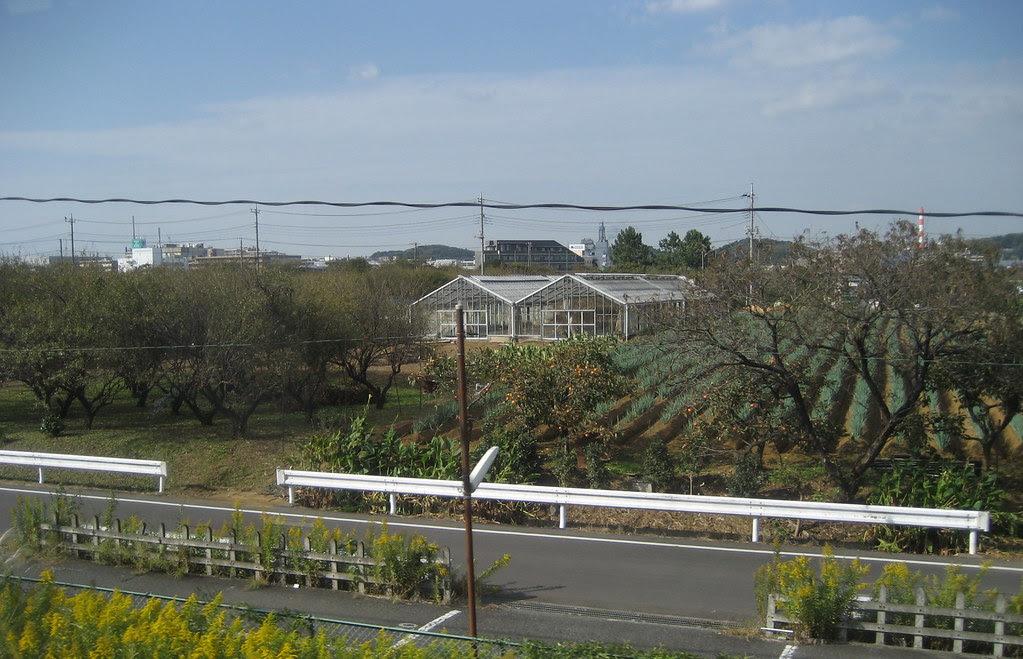 Farming alongside the JR Yokohama line in Japan