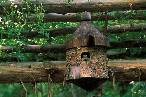 Toad sitting in handmade birdhouse on top of garden arbor