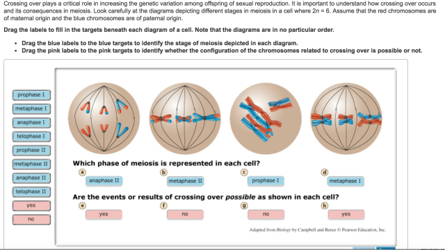 Can You Fill In The Meiosis Concept Map World Map Atlas