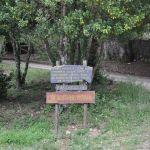 cartello alberi denaro