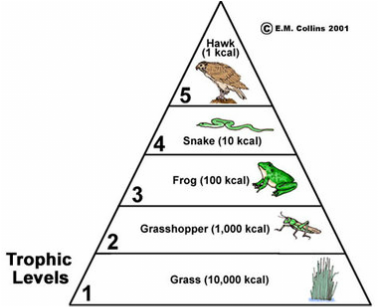 Habitats Food Chains Webs Trophic Pyramid Maggie S Science