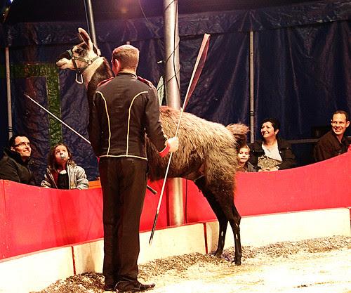 Circus17