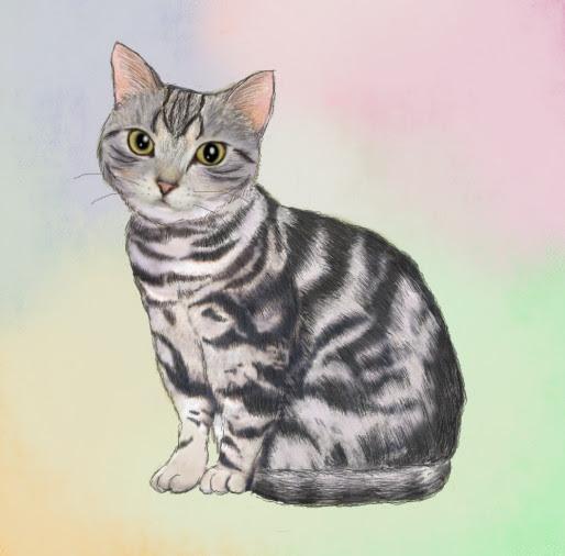 オレンジのキス アメショー猫のモフモフ日記 寒さに負けないネコ