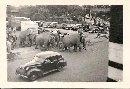 Herd by bucklesw1