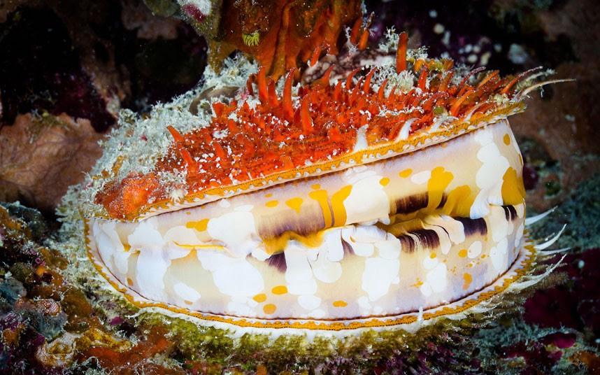 Parakseno.gr : coral 5 Ο μαγικός κόσμος του μεγάλου κοραλλιογενούς υφάλου