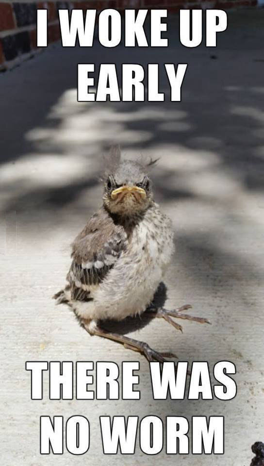 Early Bird Didnt Catch Worm Funny Pictures Quotes Memes Funny