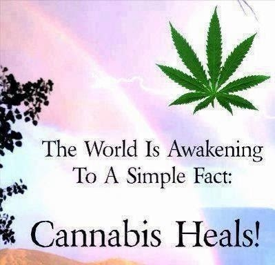 a description of cannabis as one of the most controversial and most misunderstood genus of the plant