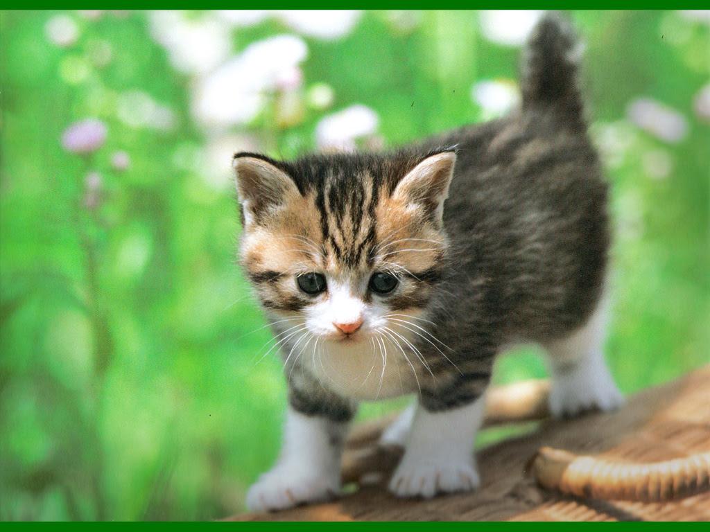 壁紙 ねこ 猫 のいいなぁ と思う壁紙集 壁紙 ねこ 猫