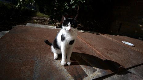 Contessina, the papal cat
