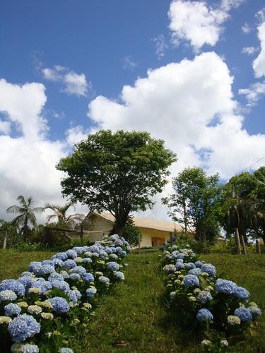 FELIZ QUINTA FLOWER BLUE! by Menina Prendada -