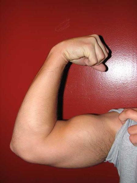 forearm supinator