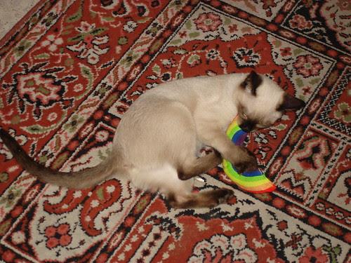Kitten with rainbow toy