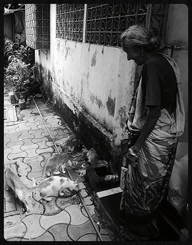 The Gujrati Lady Who Feeds Stray Cats Bandra Bazar Road by firoze shakir photographerno1
