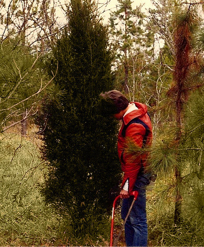 Christmas Tree Searching 1979