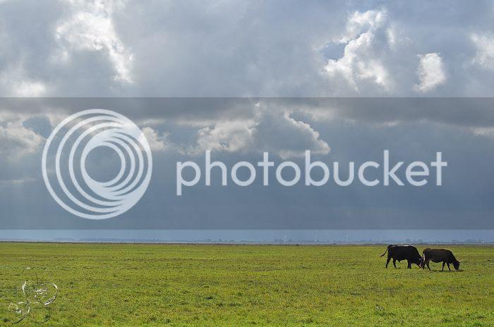 photo 15-10-2013StaatsbosbeheerZuid-Holland222-border.jpg