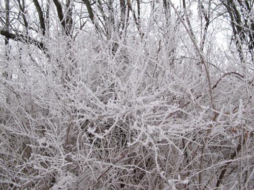 frozen mist