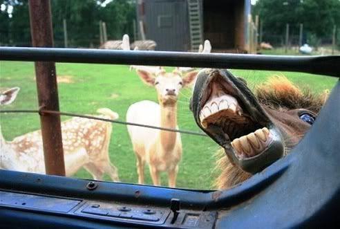 http://www.petalot.com/2010/11/adorable-animals-interrupting-snapshots/