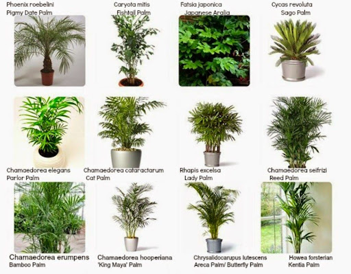 Filter Through Indoor Plants And Flowers Can Be As Expressive Interiorscaping Compendium Plant Identification Tips Tricks For