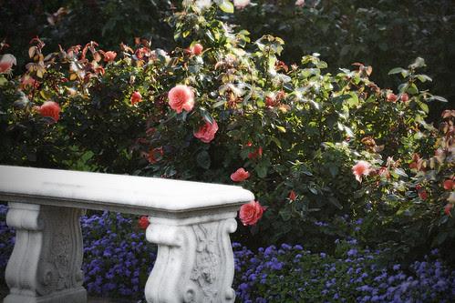 Bench in the Rose Garden