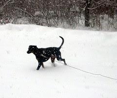 Lola_snow11808