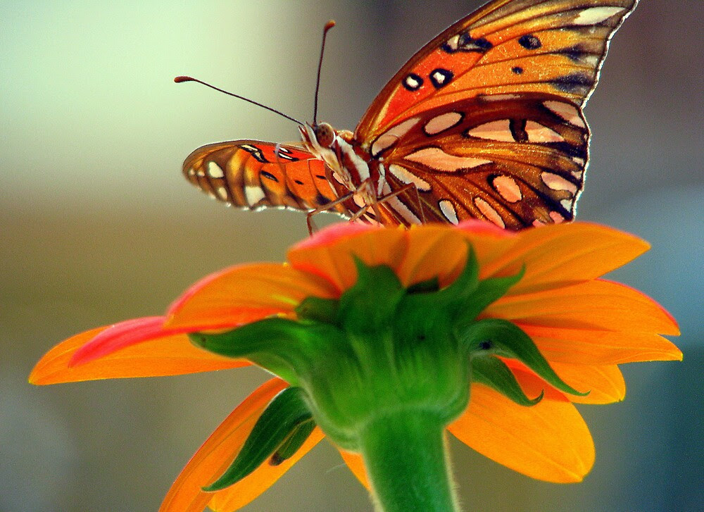"""""""The Butterfly and Mexican Sunflower"""" by DottieDees ..."""