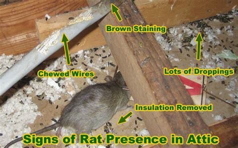Rat Removal Cost   Price, and How to Remove Rats and Mice and Rodents Inside and Outside