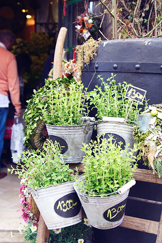 pails of herbs.