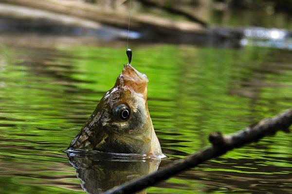 Рыбалка, ловля на поплавочную удочку, что нужно для рыбалки, рыбалка с поплавочной удочой, набор для рыбалки, удилище без колец, удилище с кольцами, поплавок, оснастка поплавочной удочки, катушка для поплавочной удочки, поплавки для ловли в проводку, рыболовный ящик