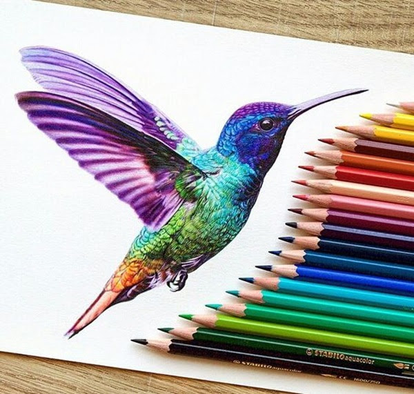 color pencil drawing Examples (25)