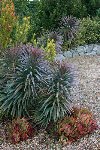 great plantings in this garden