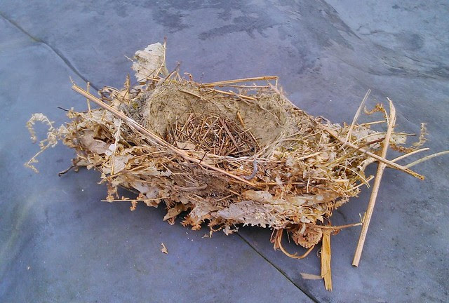 Bird nest found in logpile