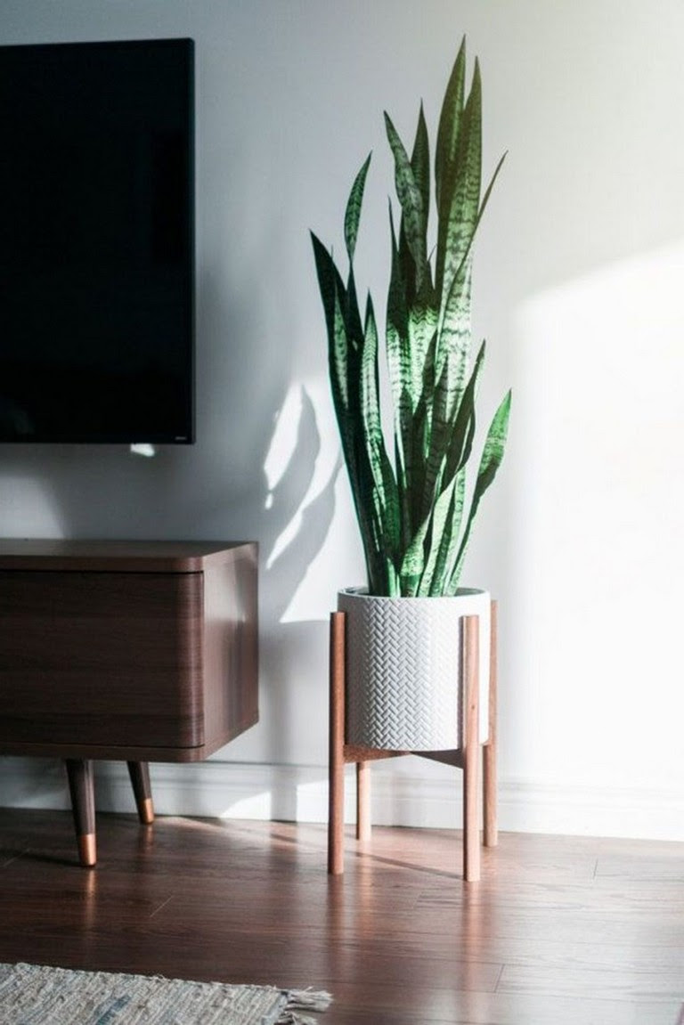 33+ Beauty Indoor Plants Decor Ideas For Your Home And ...