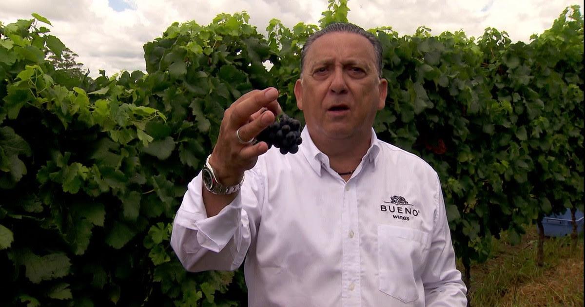 Resultado de imagem para Paixão pelo vinho leva Galvão Bueno a produzir uvas no Rio Grande do Sul