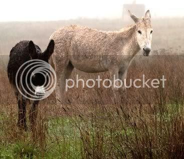 os burros fariñeiros