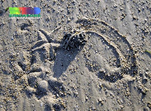 Sandy shores of Cyrene