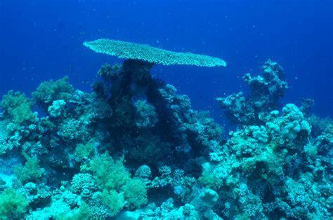 FULL WALLPAPER: Underwater Scene