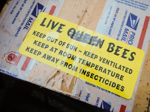Hiving Honey Bees in Top Bar Hive