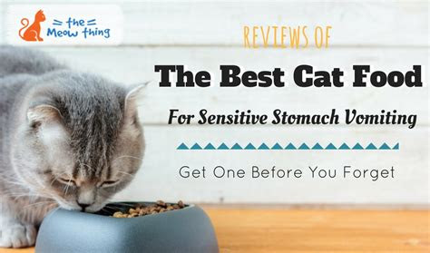 homemade cat food  sensitive stomach homemade ftempo