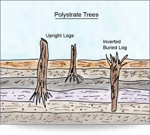 http://creationsciencetoday.com/_images/19-polystrate_trees.jpg