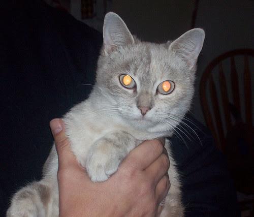 found-kitty-1