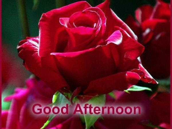 Good Afternoon Quotes Sayings Good Afternoon Picture Quotes