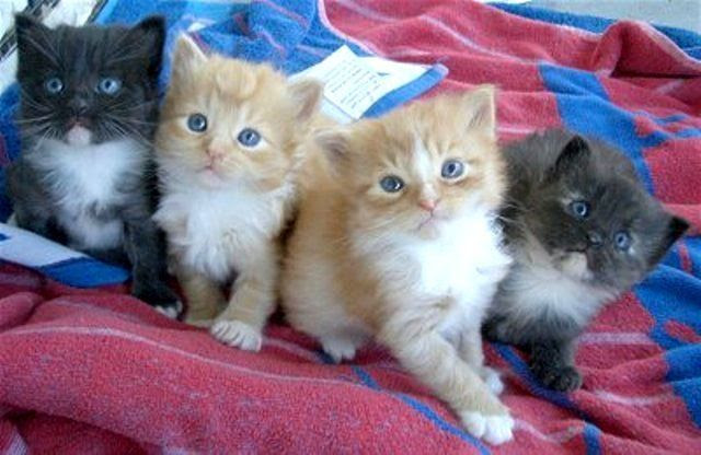Unduh 100+  Gambar Kucing Umur 4 Bulan Paling Baru