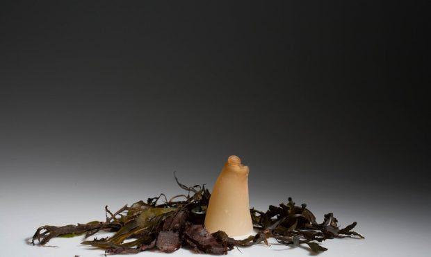 Algen-Flasche 2