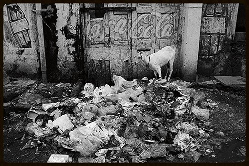 I Give Guided Tours Of Dirtiest Places In Bandra Online by firoze shakir photographerno1