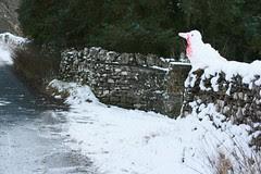 Sentinel snow robin