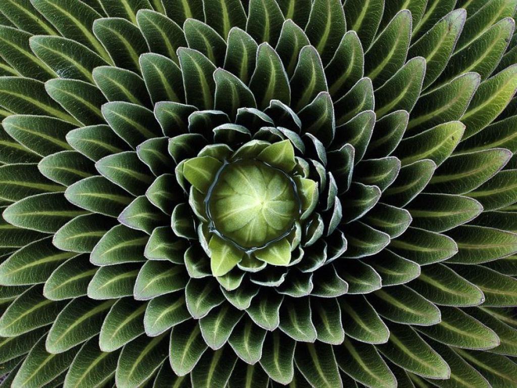 25 Fotografias de plantas para os amantes da matemática 06