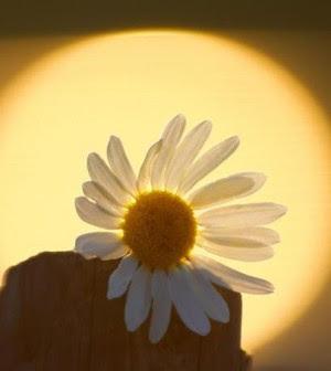 terapia del sole