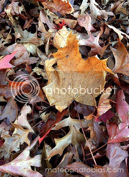 Leaves Are Falling | mateoandtobias.com